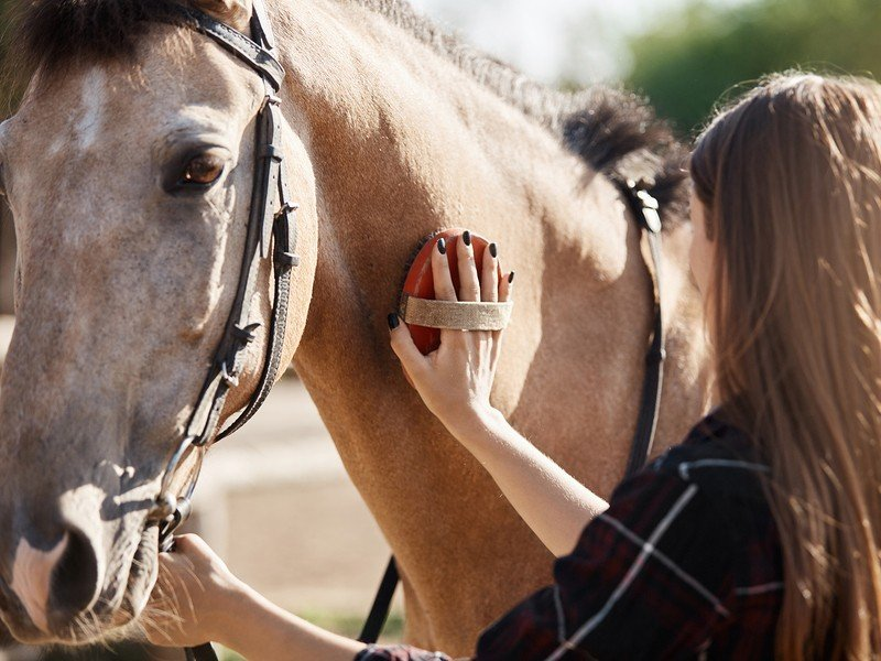 five reasons to switch to natural horse care header