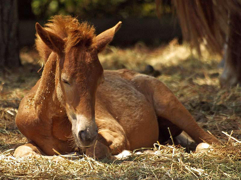 introducing_aromatherapy_to_your_foal_header