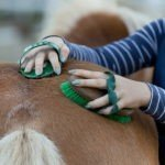 five tips to horse grooming header