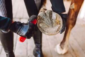 Woman cleans the horse's hooves with a special brush before riding. Horseback riding, animal care, veterinary concept.